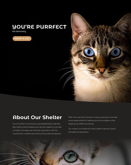 You're Purrfect Cat Sanctuary