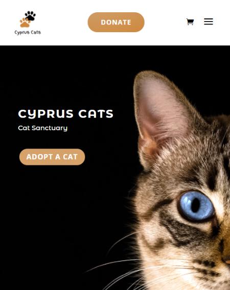 Cyprus Cats.com by Virtualeap